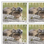 Animal families, Sheet «Marmot» Sheet with 10 stamps «Marmot» of CHF 1.00, self-adhesive, mint